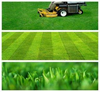 Lawn Maintenance 1